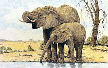 Elephants By The Waterhole posters | photos | pictures | images