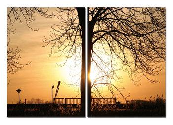 Tree of Sun Obraz