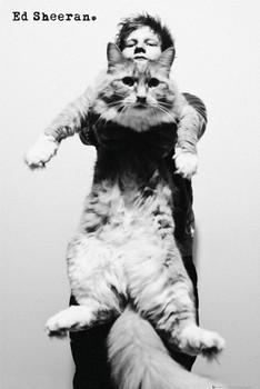Plakat Ed Sheeran - cat