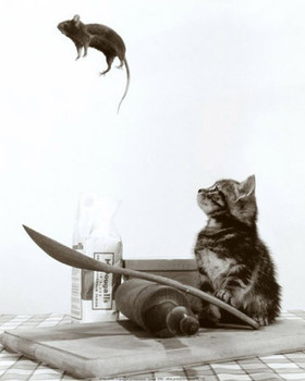 Don't play with your food - cat & mouse Poster, Art Print