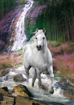 Horse - Waterfall, Bob Langrish Poster, Art Print
