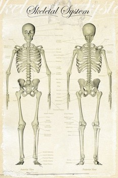 SKELETAL SYSTEM posters | art prints