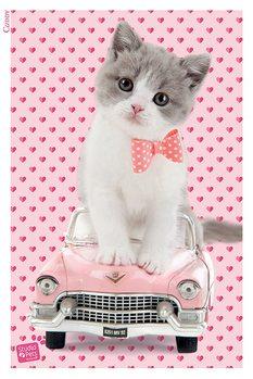 Studio Pets - Caddy Poster, Art Print