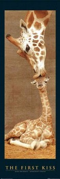 THE FIRST KISS - giraffes posters | art prints
