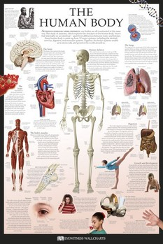 THE HUMAN BODY posters | art prints