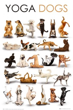 YOGA DOGS posters | art prints