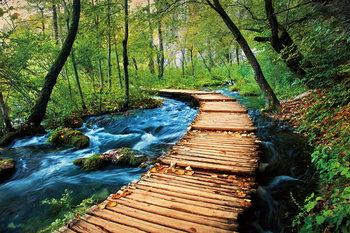 Obraz Wooden Path