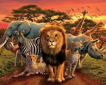Plakat African kingdom