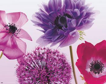 Plakat Purple summer