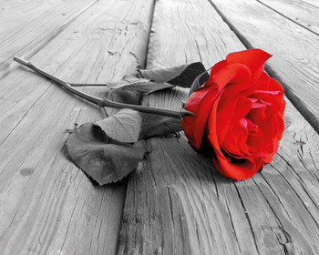RED ROSE ON WOOD posters | art prints
