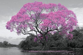 Tree - Pink Blossom Poster, Art Print