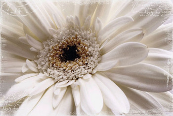 WHITE FLOWER posters | art prints