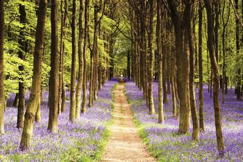 Woodland - path Poster, Art Print
