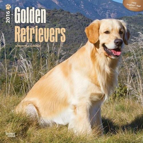 Golden retriever Kalendarz