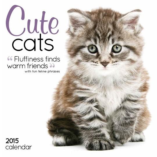 Kocięta Kalendarz