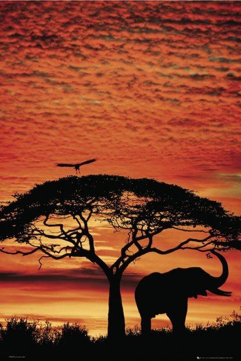 Plakat Africa Sunset – elephant