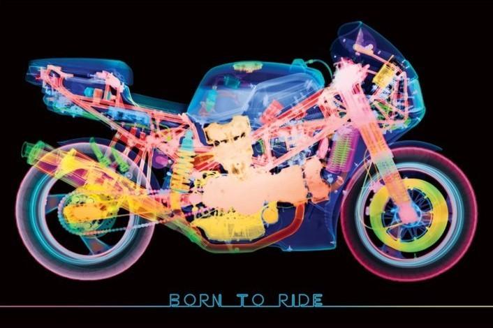 Plakat Born to ride - x-ray bike
