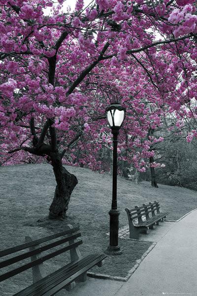 Plakat Central Park - blossom