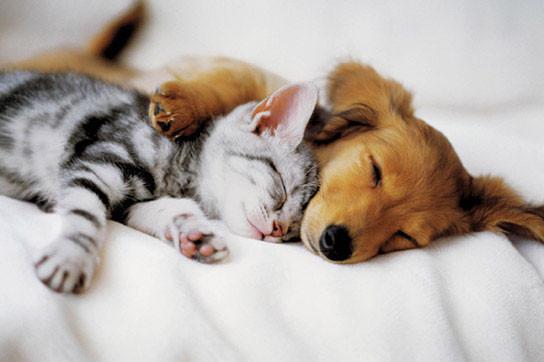 Plakat Cuddles
