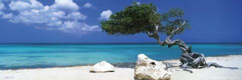 Plakat Divi Divi Tree - Tom Mackie