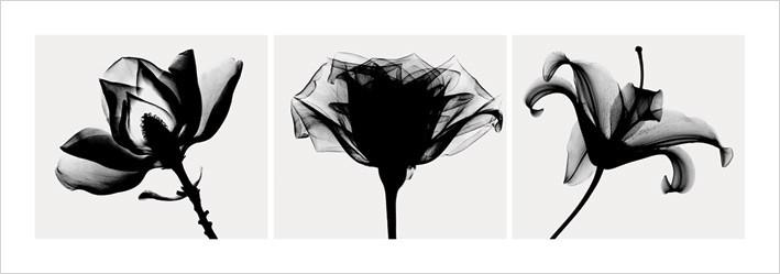 Reprodukcja Flowers - b&w