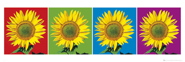 Plakat Flowers – four sunflowers