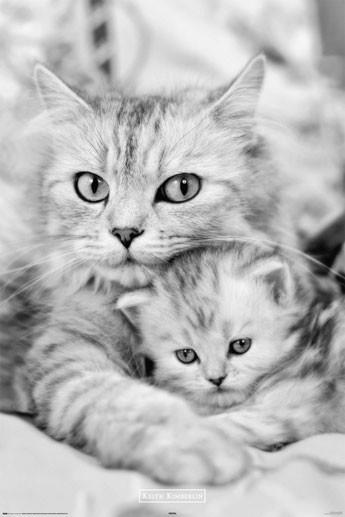 Plakat Keith Kimberlin - cat and kitty