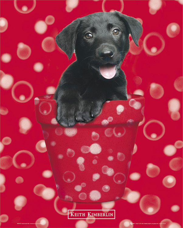 Plakat KEITH KIMBERLIN - red