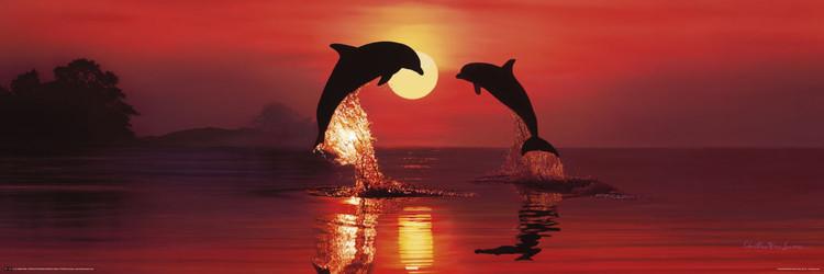 Plakat Lassen - dolphin dawn