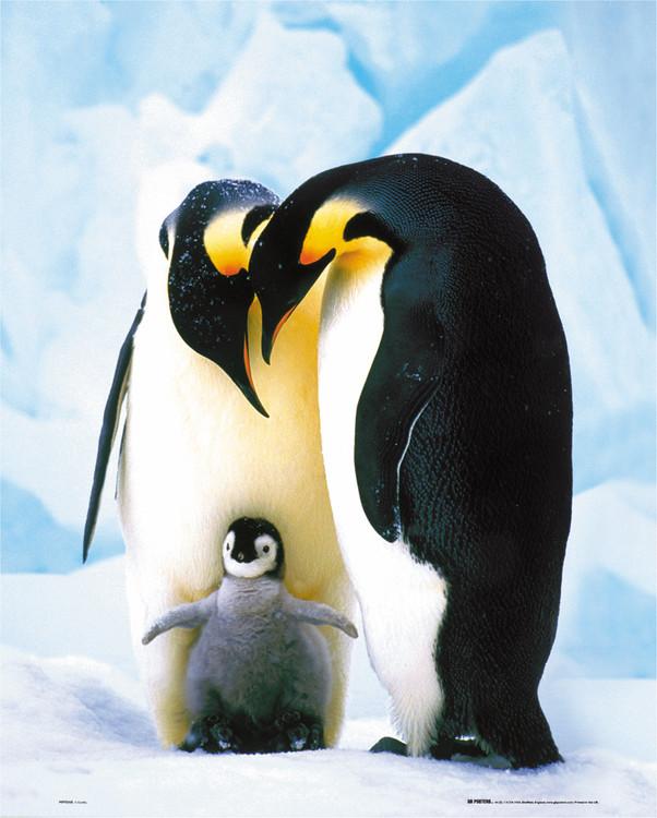 Plakat Penguins