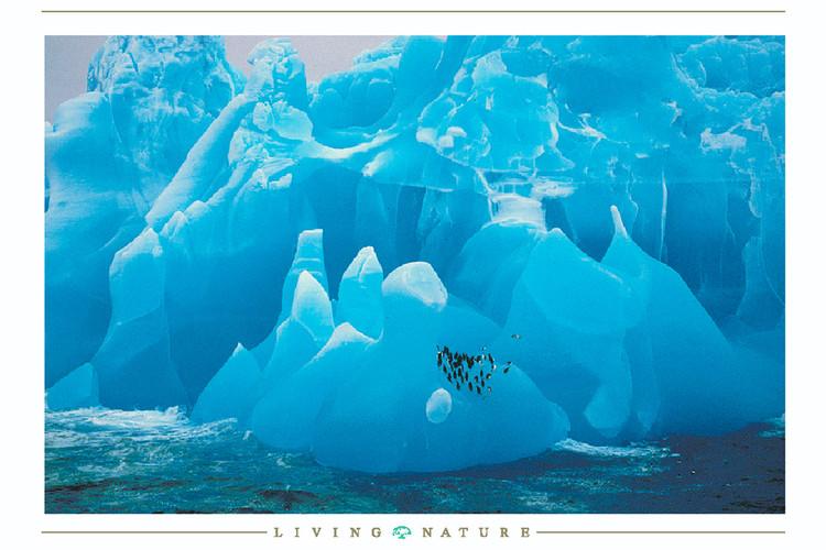 Plakat Penguis on iceberg