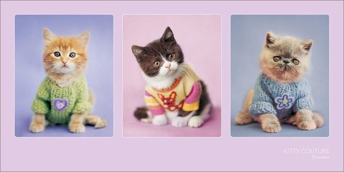 Reprodukcja Rachael Hale - Kitty Couture