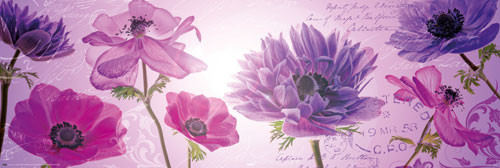 FLOWERS IN PURPLE posters | photos | pictures | images