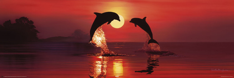Dolphins making a heart in the sunset