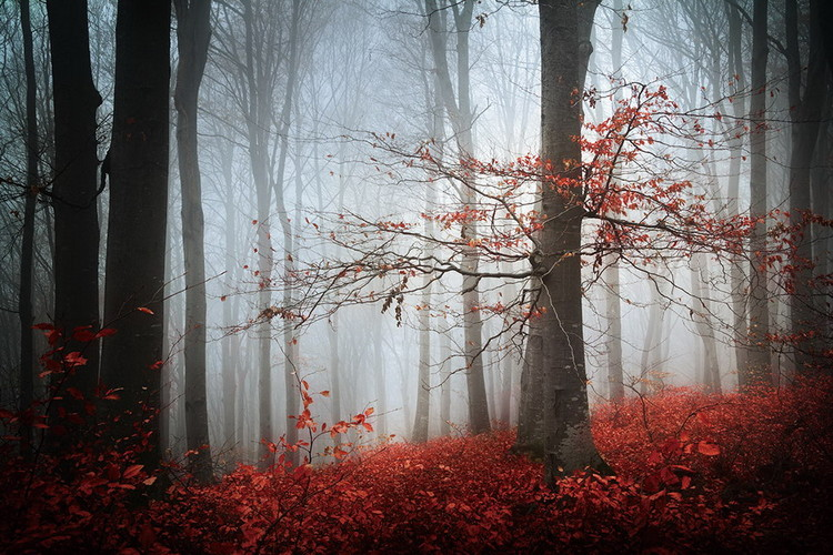 Obraz Forest - Red Forest