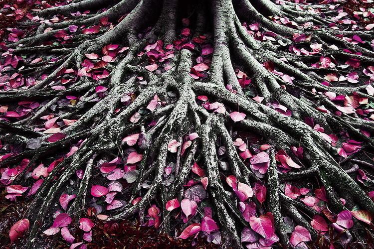 Obraz Pink World - Pink Roots