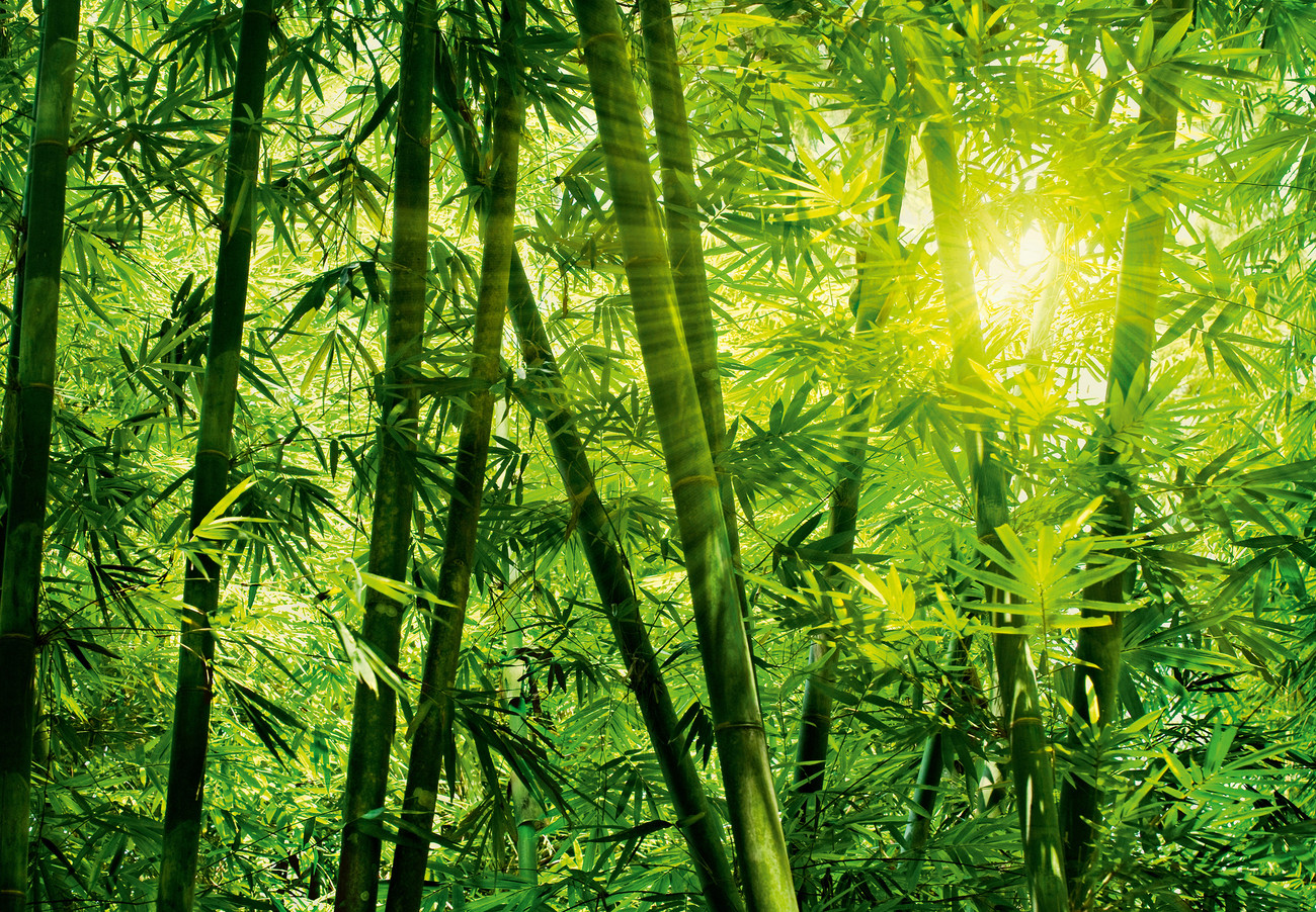Bamboo forest wall mural buy at europosters for Bamboo mural wallpaper