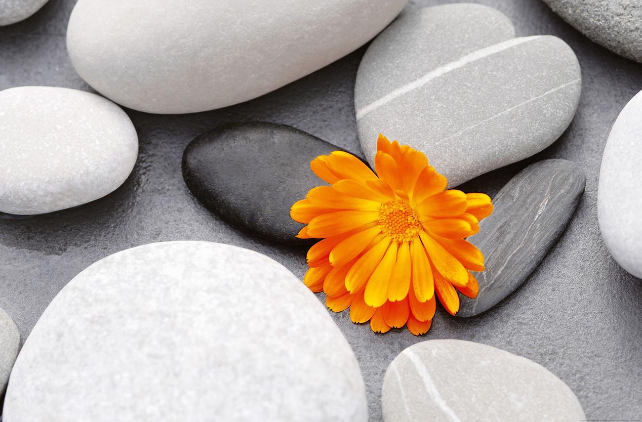 Poster ACHIM SASS heart among stones em Europosters.pt #C99802 1300x854 Acessorios Banheiro Zen