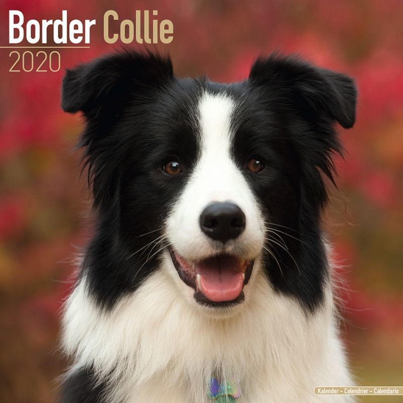 "Beautiful 8/"" x 6/"" Magnetic Photo Frame Border Collie Gift"