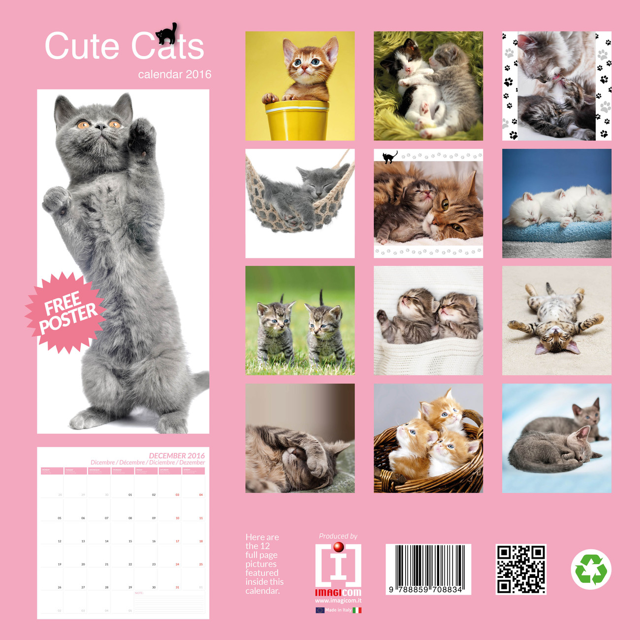 rachael hale naptár Cute Cats   Calendars 2019 on UKposters/EuroPosters rachael hale naptár