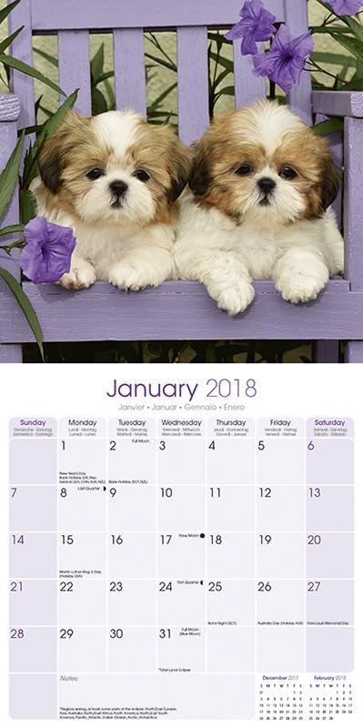 Shih Tzu Calendars 2019 On Ukpostersabposterscom