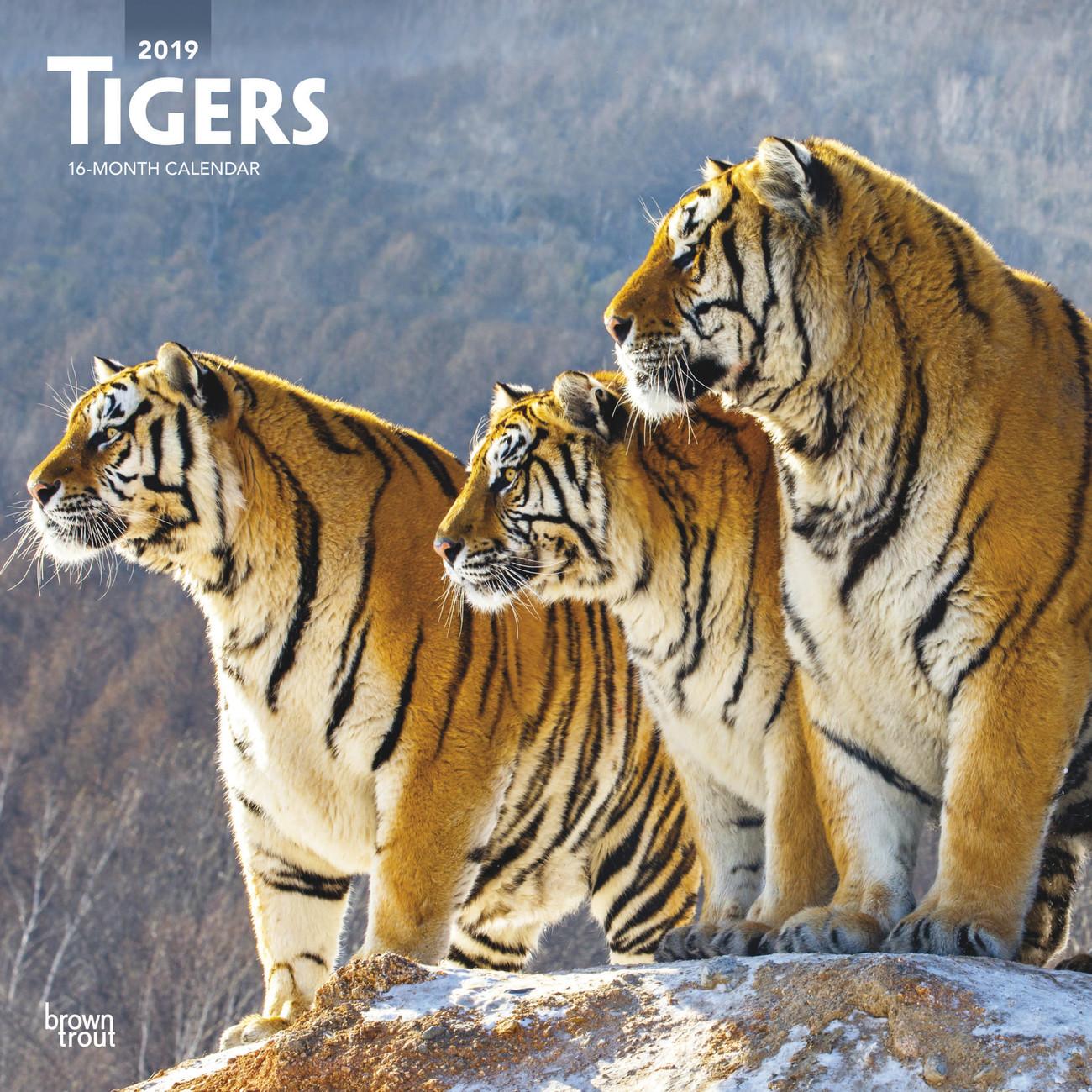 Calendario Tiger 2019.Calendario 2020 Tigers
