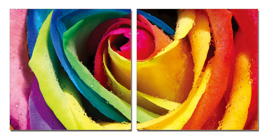 Rainbow roses mounted art print buy at for Where to buy rainbow roses