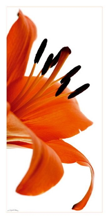 fleur de lys art print buy at. Black Bedroom Furniture Sets. Home Design Ideas