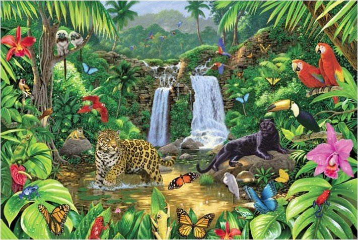 Harmony Rainforest Poster Sold At Abposters Com