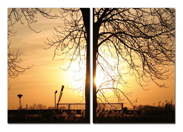 Tree of Sun Mounted Art Print