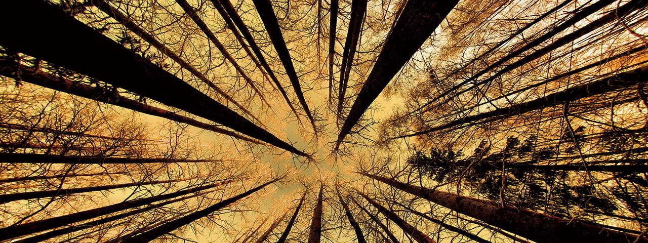 Tableau sur verre Forest - Gold Sun