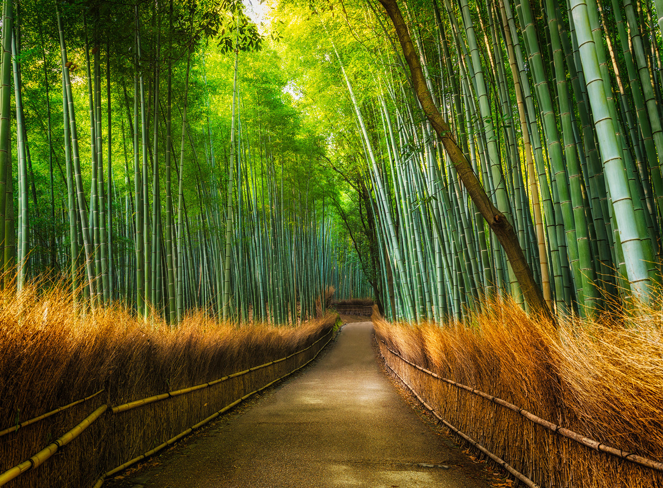 Bamboo path in the forest wall mural buy at europosters for Bamboo forest wall mural wallpaper