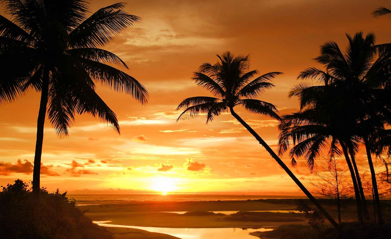 Beach tropical sunset palms wall paper mural buy at for Beach sunset mural