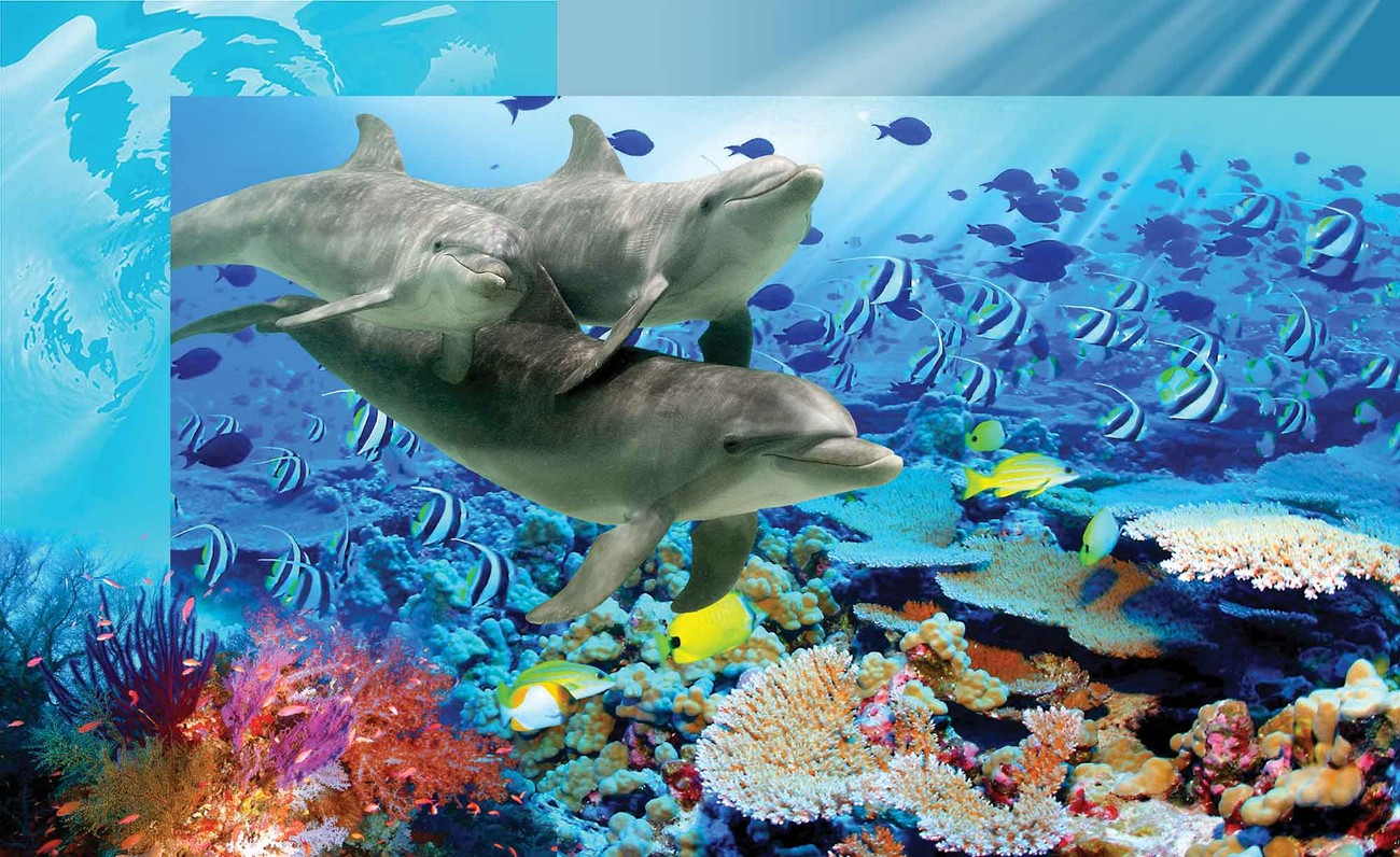 Dolphins tropical fish wall paper mural buy at for Dolphin mural wallpaper